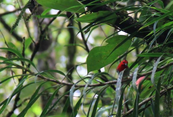 Tam widac czerwnoego ptaszka - ale daleko byl wiec slabo