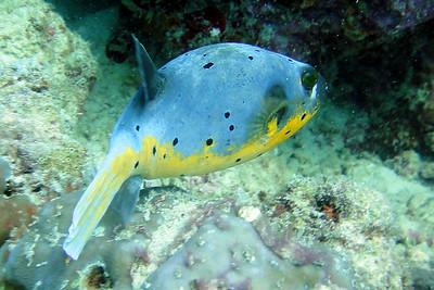 Smieszna ryba