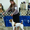 Rocket, GCH Brigade's Hi Hope Rocket MH x Angel, CH Shiloh's Swift Kiss A Taq daughter
