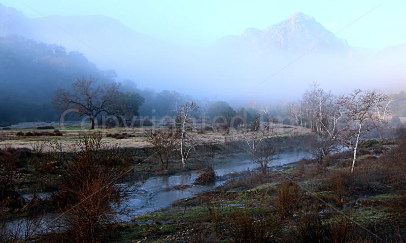 Heavenly Mist