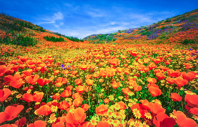 Malibu Spring Symphony Superbloom #12: Malibu California Superbloom Wildflowers  Elliot McGucken Malibu Fine Art Landscape Nature Photography Prints & Luxury Wall Art