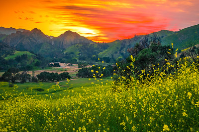 Malibu Spring Symphony Superbloom #14: Malibu California Superbloom Wildflowers  Elliot McGucken Malibu Fine Art Landscape Nature Photography Prints & Luxury Wall Art