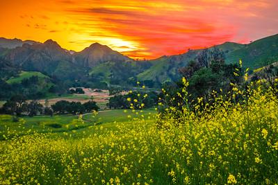 Malibu Spring Symphony Superbloom #14: Malibu California Superbloom Wildflowers  Elliot McGucken Malibu Fine Art Landscape Nature Photography Prints & Luxury Wall Art