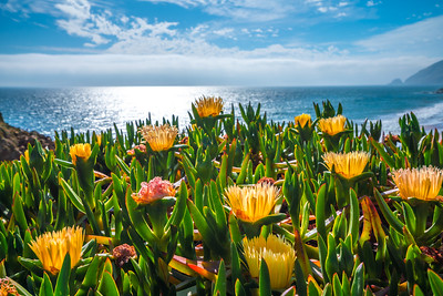 Malibu Spring Symphony Superbloom #9: Malibu California Superbloom Wildflowers  Elliot McGucken Malibu Fine Art Landscape Nature Photography Prints & Luxury Wall Art