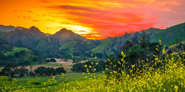 Malibu Spring Symphony Superbloom #13: Malibu California Superbloom Wildflowers  Elliot McGucken Malibu Fine Art Landscape Nature Photography Prints & Luxury Wall Art