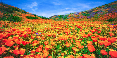 Malibu Spring Symphony Superbloom #11: Malibu California Superbloom Wildflowers  Elliot McGucken Malibu Fine Art Landscape Nature Photography Prints & Luxury Wall Art