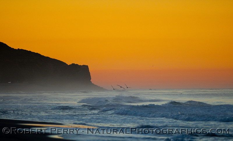 Sunrise, Point Dume, with Brown Pelicans (Pelecanus occidentalis).
