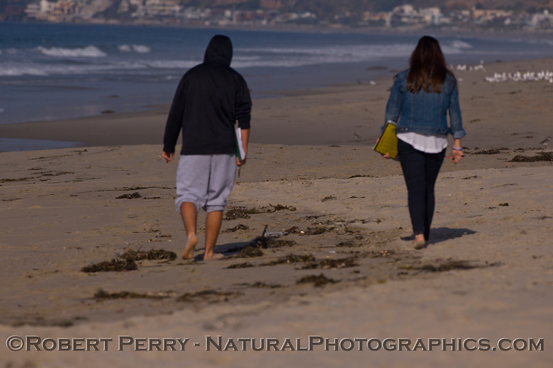 The high tide debris count.