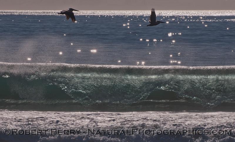 Two Brown Pelicans (<em>Pelecanus occidentalis</em>) fly above a late afternoon Zuma Beach wave.