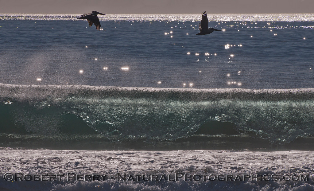 Two Brown Pelicans (<em>Pelecanus occidentalis</em>) fly above a late afternoon Zuma Beach wave.