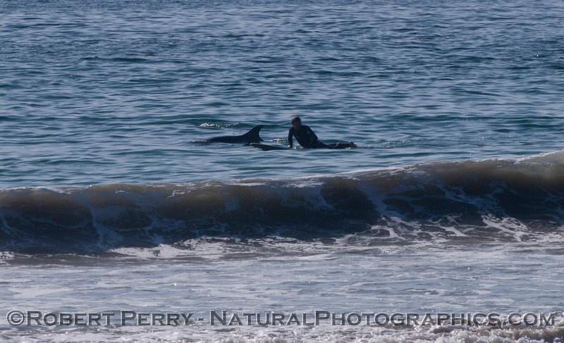 Tursiops and surfer 2012 02-02 Zuma-005
