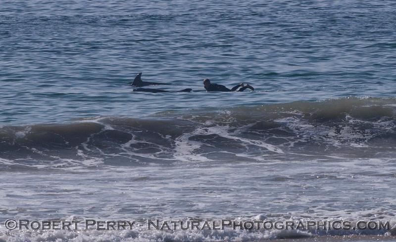 Tursiops and surfer 2012 02-02 Zuma-004
