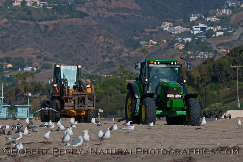 Tractors work in tandem as they move the lifeguard towers to a safe location in preparation for possible winter storm surf.