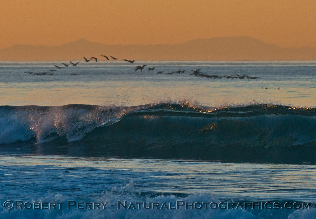 A flock of brown pelicans (<em>Pelecanus occidentalis</em>), Catalina Island and a glassy wave -- dawn at Zuma Beach.