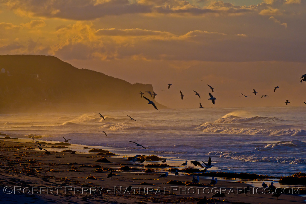 Point Dume sunrise with gulls.