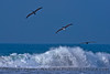Three brown pelicans (Pelecanus occidentalis) soar across the waves.