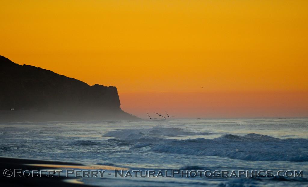 Sunrise, Point Dume, with Brown Pelicans (Pelecanus occidentalis).
