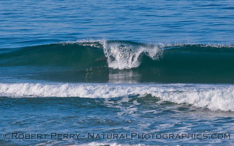 Image 4 of 4:  Tursiops truncatus surfing.