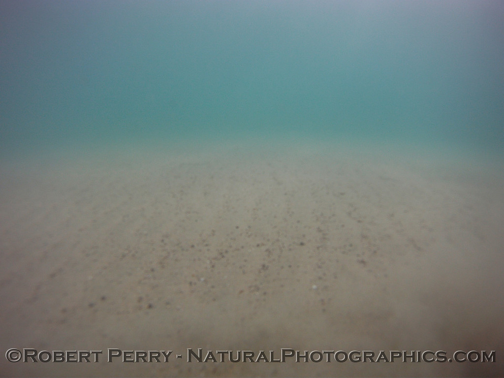 GoPro benthic survey sled captures the bottom at Zuma in approx 3 meters depth (just barely outside the surf zone).  Horizontal sand furrows that typically parallel the shore can be seen along with small rocks and shell debris.
