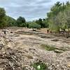 Roman amphitheatre Alcúdia