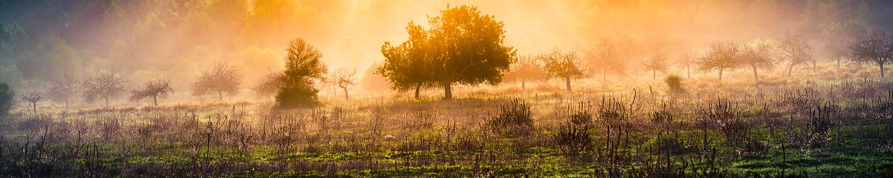 Magic carob tree