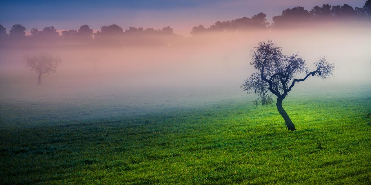 2015-12 Almond in a mystery mist in Mallorca