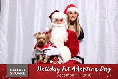 Mallory Square Holiday Pet Adoption Day