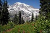 Mount Rainier - Washington State