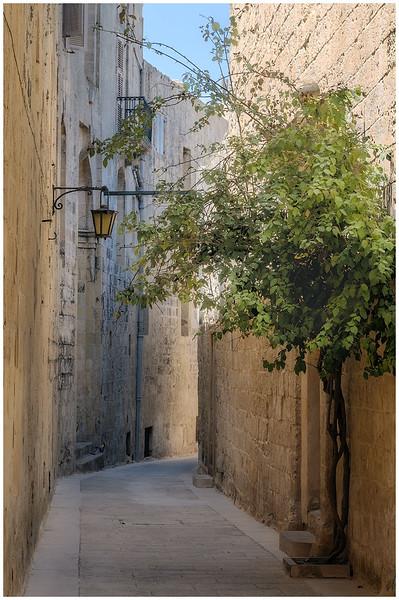 Narrow Street With Tree
