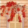 Bougainvillea Over The Window