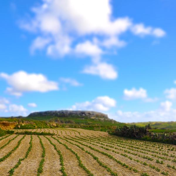 Farmland in Gozo. 2018.