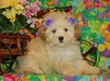 SOLD: Karin Mc.<br /> PUPPY NUMBER ( # MP-TOY-192-CL-G-3 )<br /> BREED: Malte Poo<br /> SIZE:  TOY <br /> COAT: This puppy has Soft  teddy bear curls.Mom was a maltese Dad was a poodle.<br /> COLOR: Cream with Apricot ears<br /> DOB:4-10-06