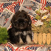 Sold to Canan Beyoglu of Houston TX PUPPY NUMBER ( # Peek A Poo FEB -62- 2006 )<br /> Breed: Peek A Poo<br /> SIZE:  Toy<br /> SEX: Male<br /> PRICE: $1,175.00<br /> This price includes shipping thru Continental Airlines.<br /> Description: This little guy has the most loveable personality and the cutest little face! He is very calm and mild mannered.