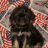 X Sold to Canan Beyoglu of Houston TX PUPPY NUMBER ( # Peek A Poo FEB -62- 2006 )<br /> Breed: Peek A Poo<br /> SIZE:  Toy<br /> SEX: Male<br /> PRICE: $1,175.00<br /> This price includes shipping thru Continental Airlines.<br /> Description: This little guy has the most loveable personality and the cutest little face! He is very calm and mild mannered.