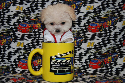 Malti Poos featured in Commercials, Movies, T.V. Shows, Pet Contest, Nespapers & Magazines