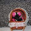 Female Maltipoo Black For Sale # 2766