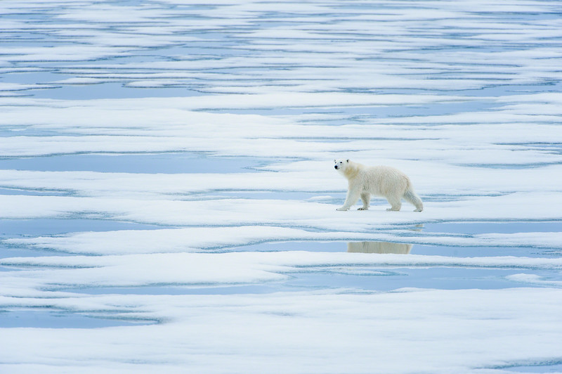 polarbear_1610