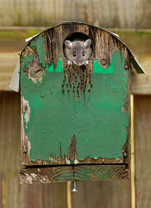 A Mouse in a House