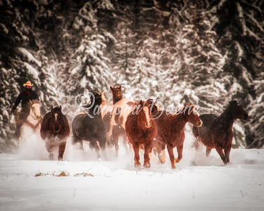 Horses in Winter 2
