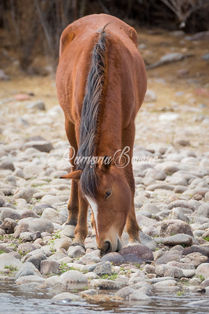 Horse at the Riverbed