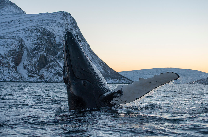 Gentle Giant, Norway