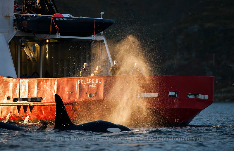 Whale Safari, Tromsø, Norway