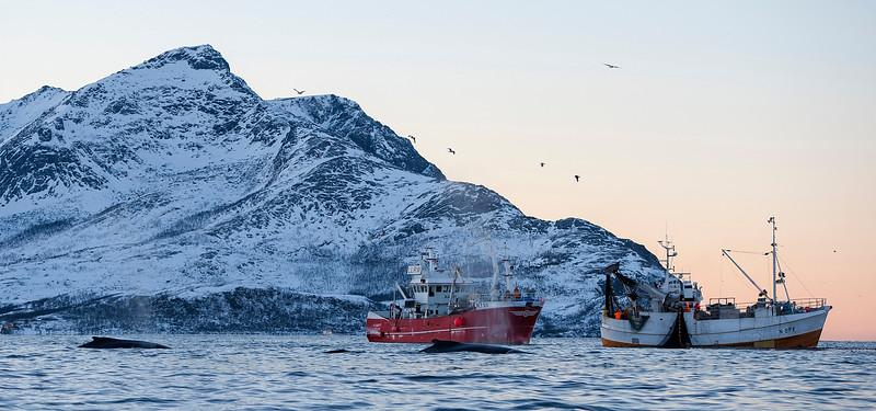Norwegian Fjord Fisheries, Vengsøyfjorden