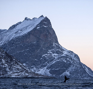 Humpback Whale under Mount Skamtinden, Norway