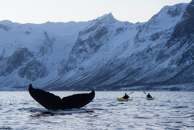 Kayaking with Giants, Norway