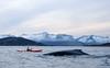 Kayaking with Gentle Giant