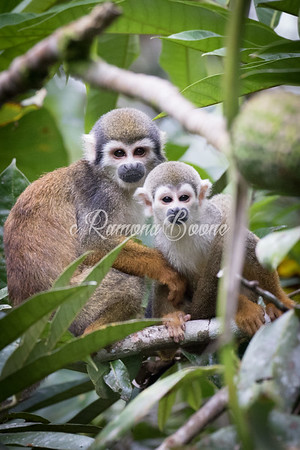 3. Squirrel Monkey