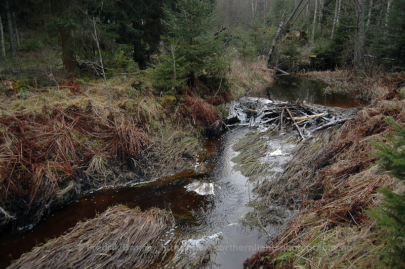 Foundation to a Beaver Lodge, Sweden