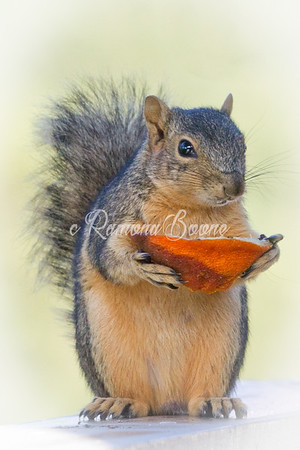 20. Squirrel and Orange Peel