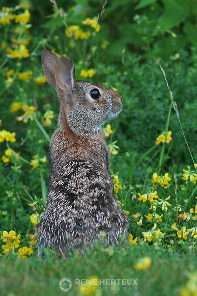 Rabbit in spring flowers